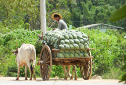 Myanmar Delivering products